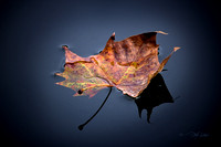 Leaf on the water 4